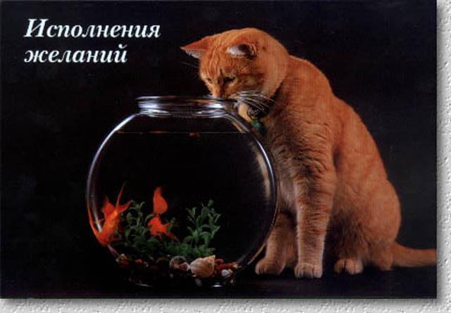 Наши поздравления 2017  - рыжий кот).jpg