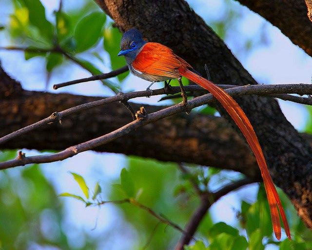 Красивая красная птица - что означает символизирует? - zAVJNpB2lPY.jpg