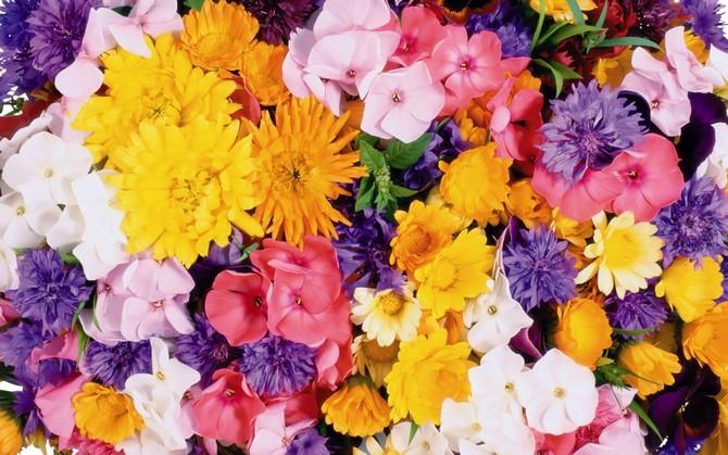 Talullah Tu, огромное спасибо  - 1920flower_1_(93).jpg