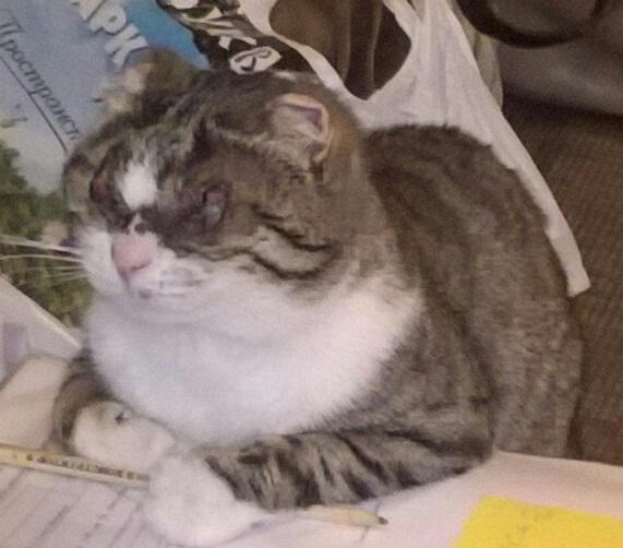 Помогите узнать, живы ли мои коты - Левочка.jpg
