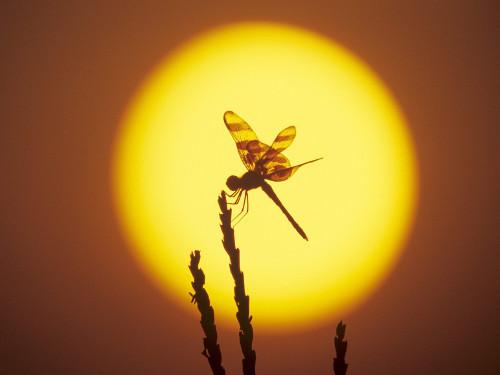 Летнее Солнцестояние - важный магический день в году - 1.jpg
