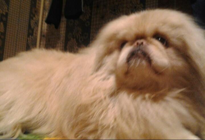 Потерялась собака хотя бы знать - жив ли он  - IMG_20180530_163819_915.jpg