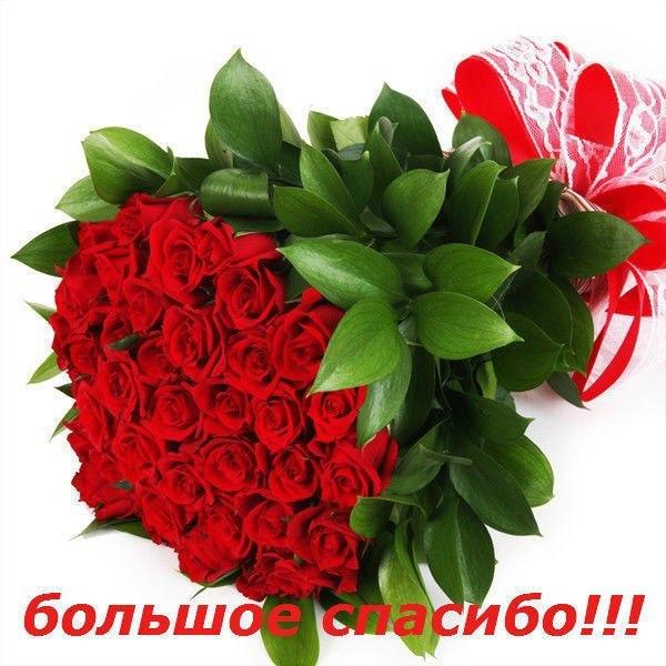 Milena Zoloto - 30b5487e1f379bd1fa4c0a5dd91630e7.jpg