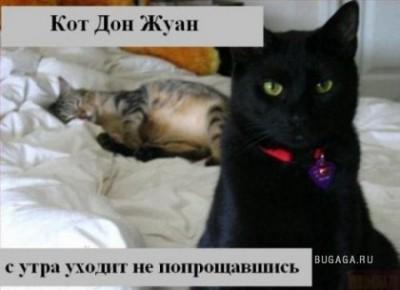 ох уж эти КОТЭ забавные и смешные картинки кошачих  - 1209156942_13.jpg