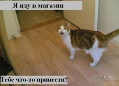 ох уж эти КОТЭ забавные и смешные картинки кошачих  - 1209156938_19.jpg