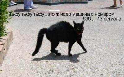 ох уж эти КОТЭ забавные и смешные картинки кошачих  - _056bQSRj_w-1.jpg