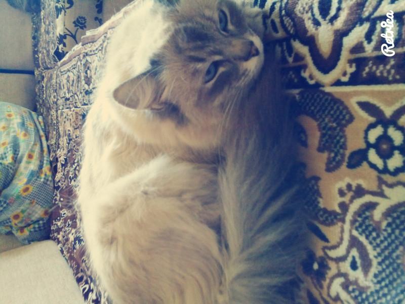 помогите узнать жива ли кошка - IMG_20160610_130142.jpg
