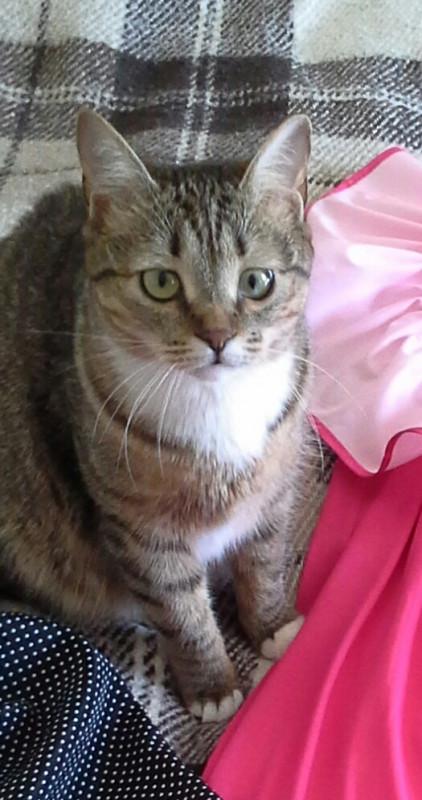 Все еще ищем кошку Соню! - 20160327_122144-1.jpg