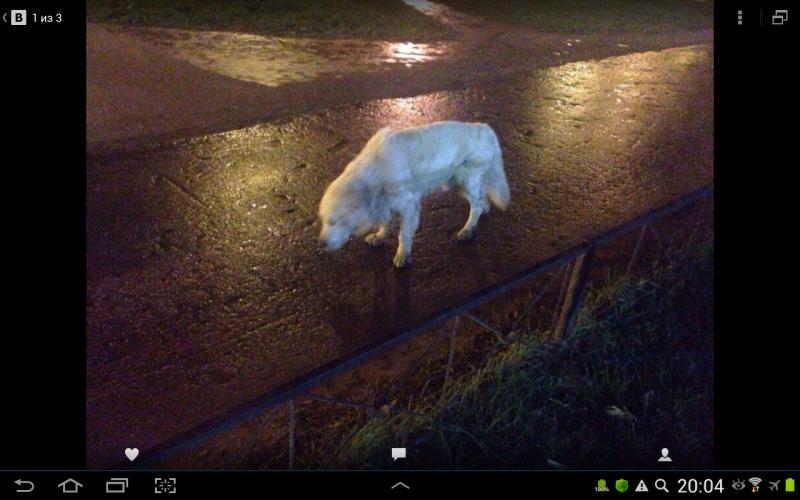 Пропала собака Камелот - Screenshot_2017-11-20-20-04-04.png