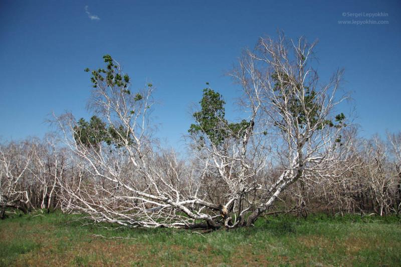 Деревья-доноры и вампиры - d0e3f427a75777a9e685dcfecda9f973.jpg