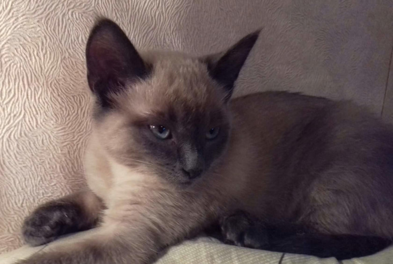 Помогите узнать, живы ли мои коты - imageкошка.jpg