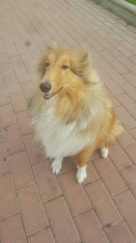 Потерялась собака, жива ли? - OvXbv-79gv0.jpg