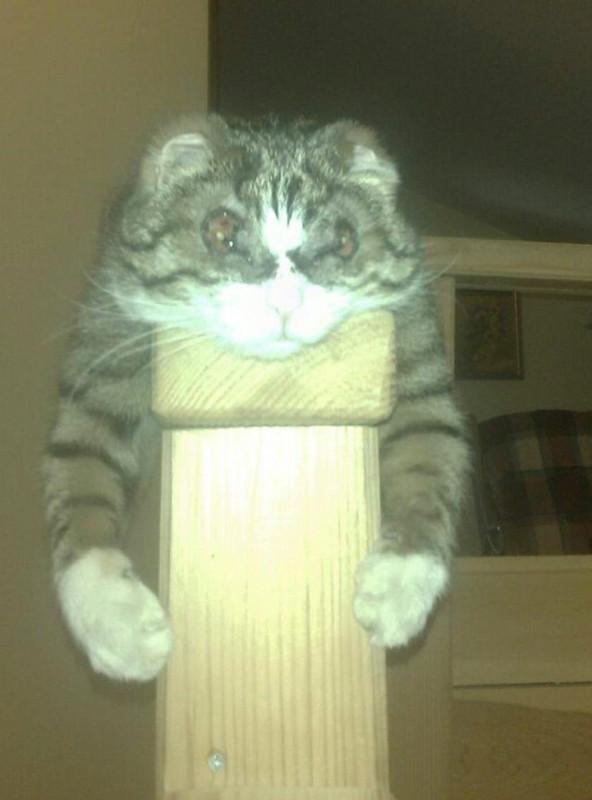 Помогите узнать, живы ли мои коты - image.jpg