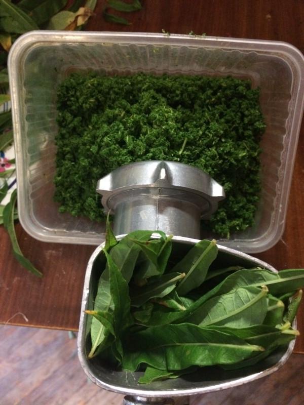 проворачиваем на мясорубке для получения гранулированного чая  - IMG_2047.JPG