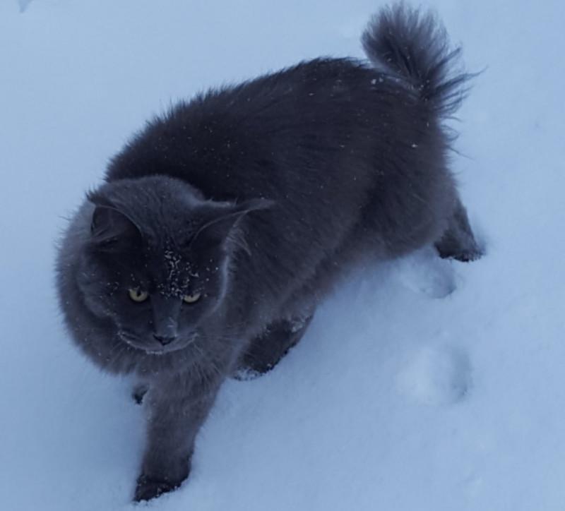 Помогите найти кота - 1523455492272.jpg