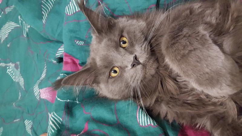 Помогите найти кота - 20180207_163611.jpg