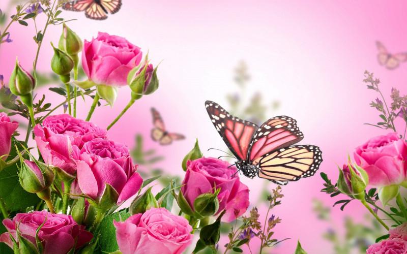 Благодарность для ЯГОДКА-МАЛИНКА - 1415090202_roses-flowers-pink.jpg
