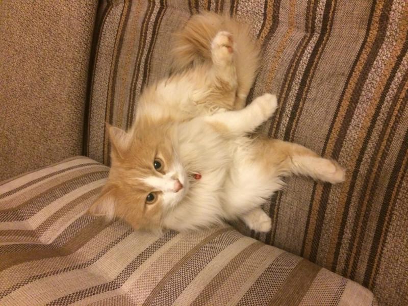 Здравствуйте У меня пропал кот. Возможно узнать, жив он или нет? - 9206EABA-CBF8-47FF-A6CD-DB86600F8011.jpeg