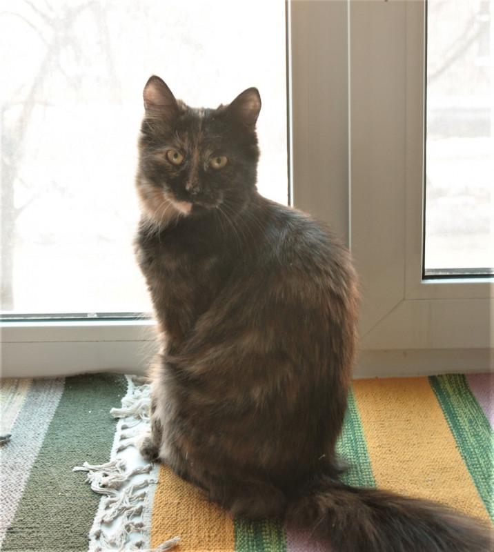 Ищу кошку  - DSC_3955.jpg