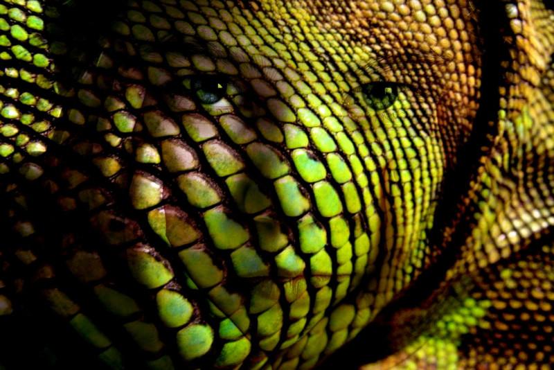 Кто такие лярвы и как с ними бороться - kid_and_lizard_skin_by_frank_555.jpg