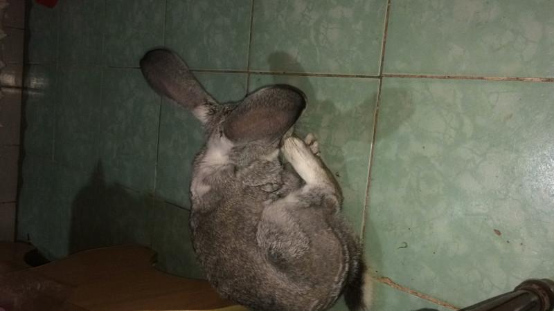 Помоги пожалуйста убежал кролик - E6FAAE8F-6077-4400-8A1A-FD0E8C4983B1.jpg