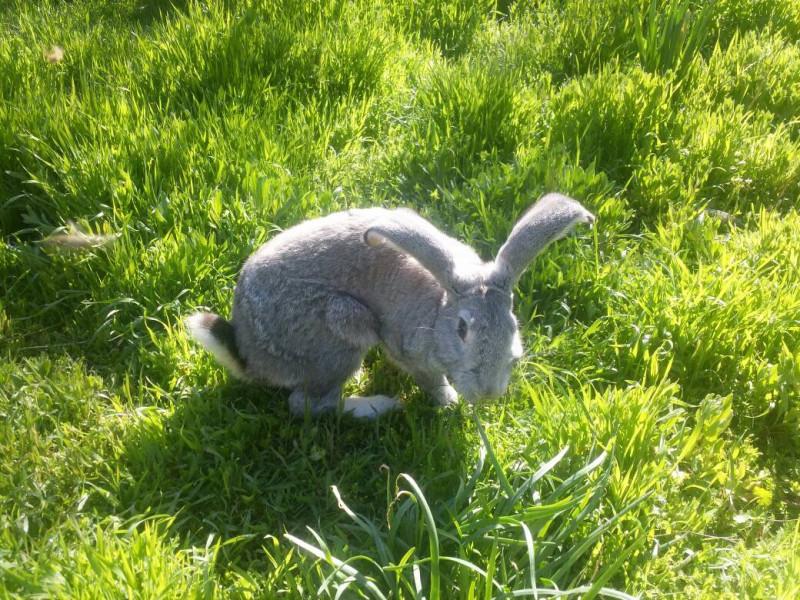 Помоги пожалуйста убежал кролик - IMG_7481.JPG