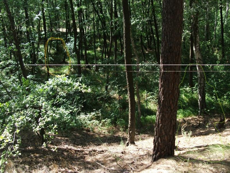 Как войти в лес? - Inkedbf55ad900291_LI.jpg