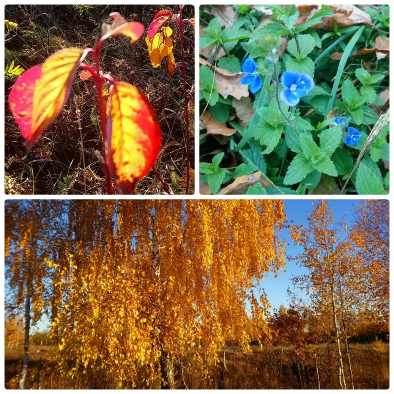 Чудеса - учимся видеть - Золотая осень.jpg