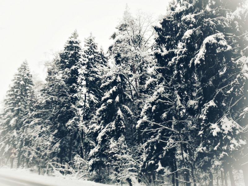 Новогодний конкурс Волшебница Зима - BT4FBEPPHqU.jpg