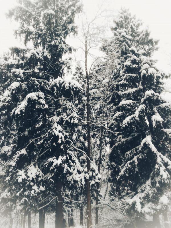 Новогодний конкурс Волшебница Зима - lik5ynP05XU.jpg