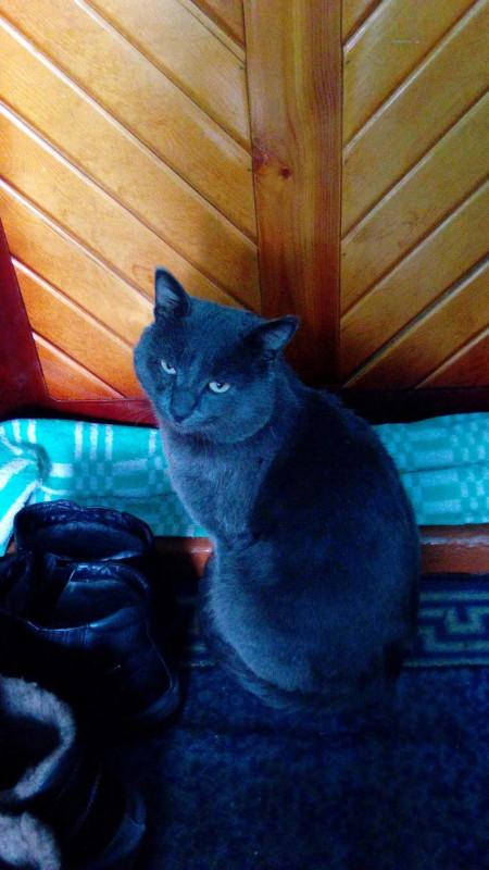 Пожалуйста помогите найти котёнка. Сил уже нет... - image 1.jpg