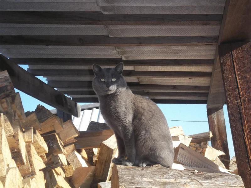 Пожалуйста помогите найти котёнка. Сил уже нет... - image.jpg