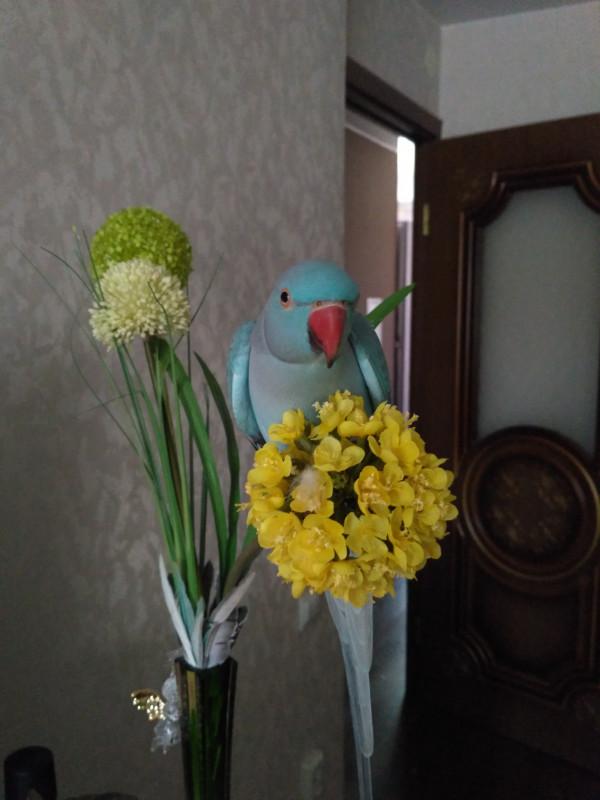 Улетел попугай - IMG_20180802_135549.jpg